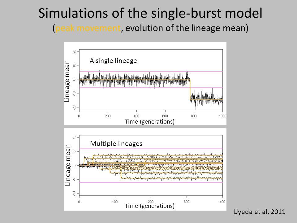 Simulations of the single-burst model (peak movement, evolution of the lineage mean) Uyeda et al. 2011 A single lineage Time (generations) Lineage mea