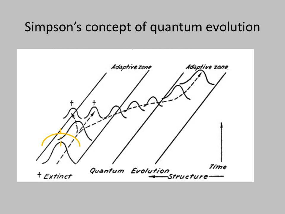 Ongoing synthesis in evolutionary quantitative genetics Quantitative genetics provides a theoretical framework with direct connections to data Key concepts rendered in statistical terms Mega-data sets reveal evolutionary patterns Test alternative models in ML framework