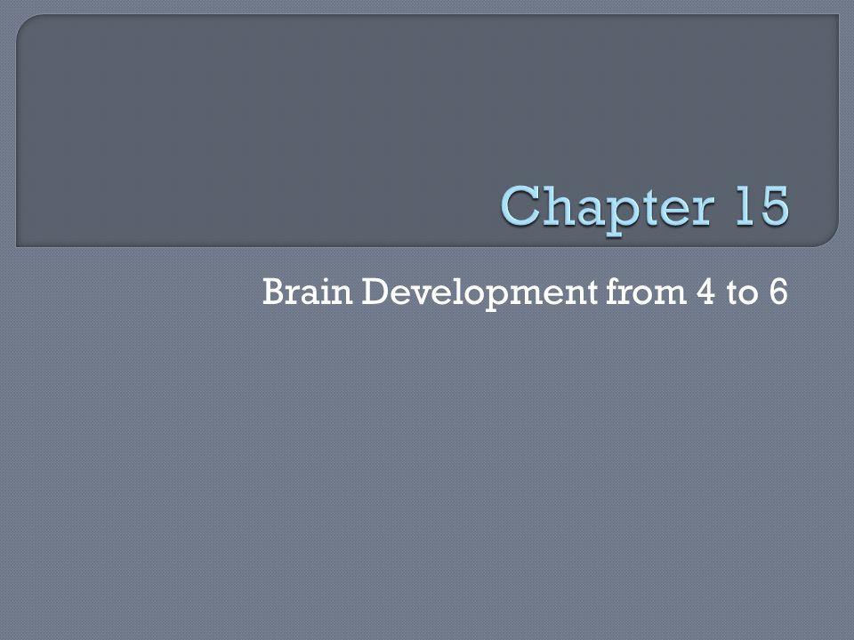Brain Development from 4 to 6