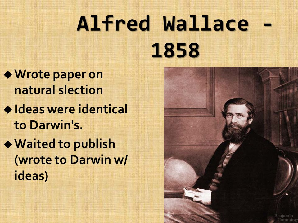 Alfred Wallace - 1858 u Wrote paper on natural slection u Ideas were identical to Darwin s.