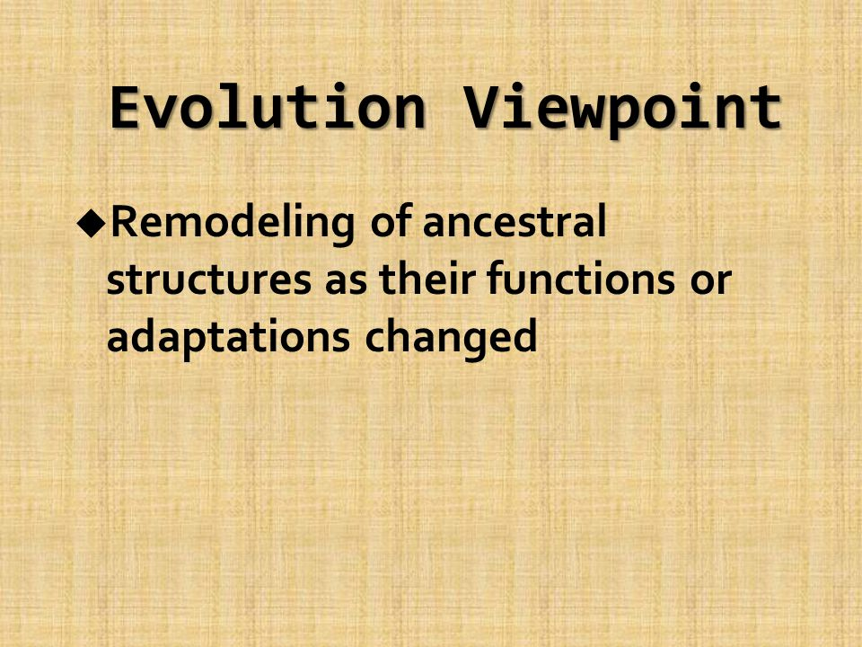 Evolution Viewpoint u Remodeling of ancestral structures as their functions or adaptations changed