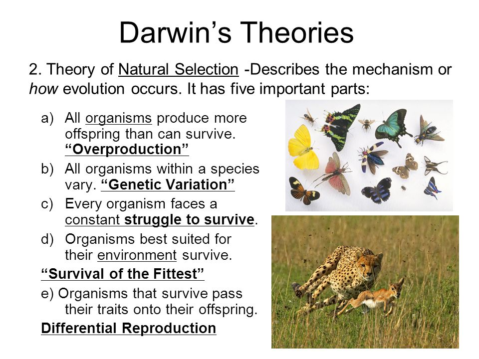Darwin's Theories 2.Theory of Natural Selection -Describes the mechanism or how evolution occurs.