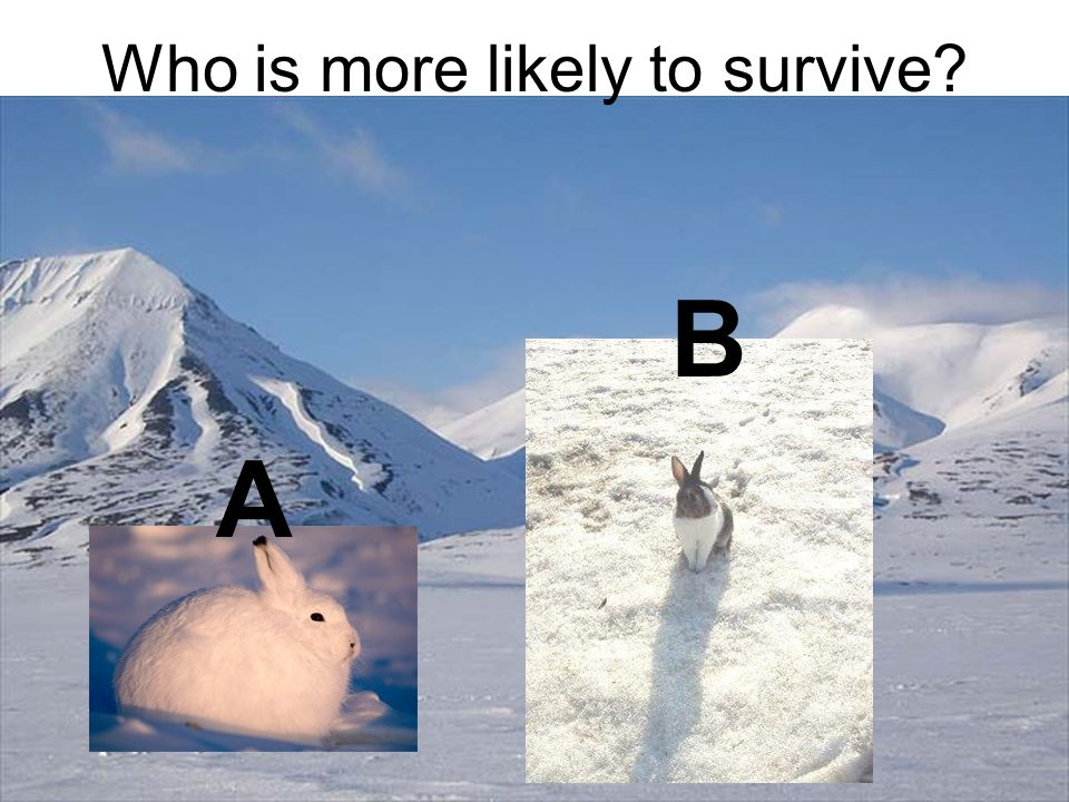Who is more likely to survive? A B