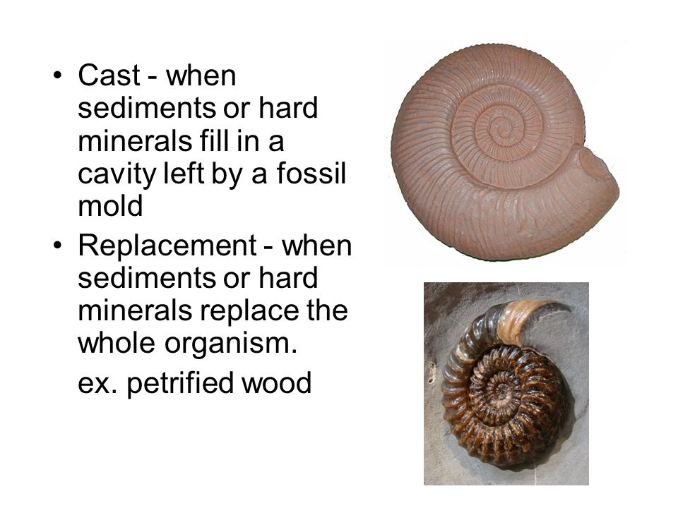Cast - when sediments or hard minerals fill in a cavity left by a fossil mold Replacement - when sediments or hard minerals replace the whole organism.