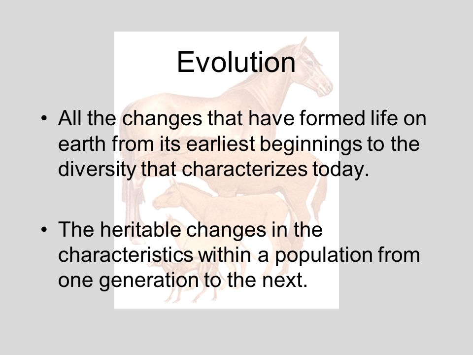 Evolution All the changes that have formed life on earth from its earliest beginnings to the diversity that characterizes today.