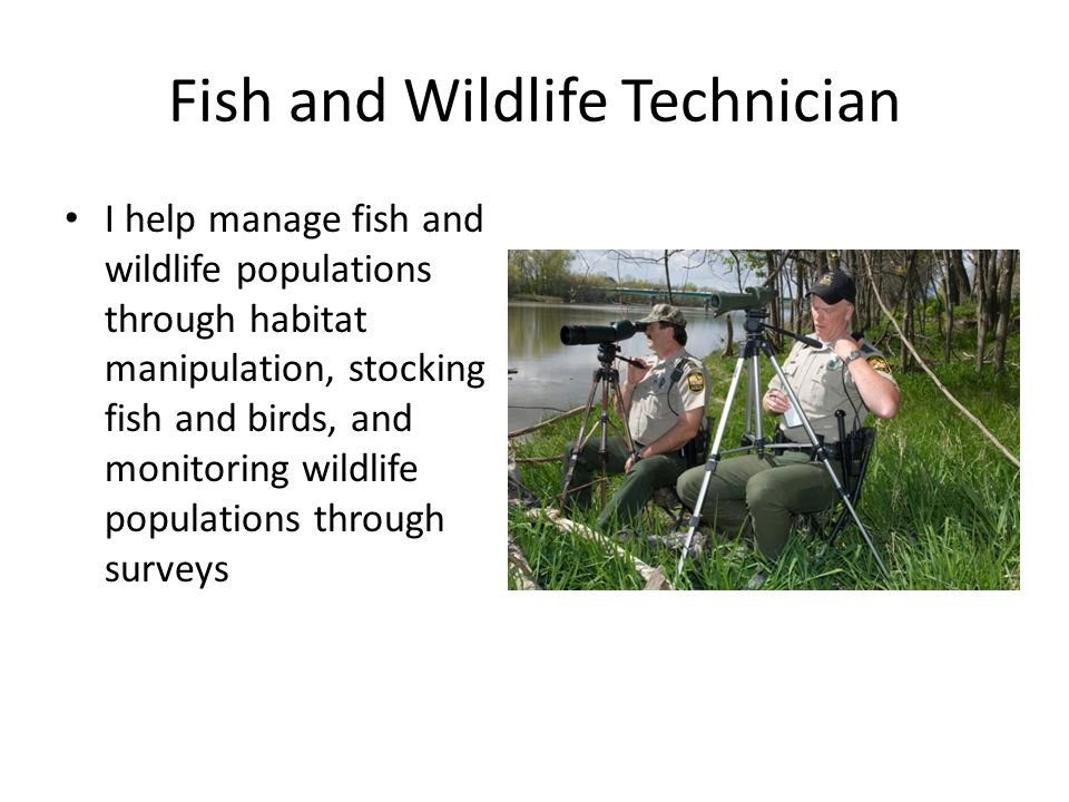 Fish and Wildlife Technician I help manage fish and wildlife populations through habitat manipulation, stocking fish and birds, and monitoring wildlif