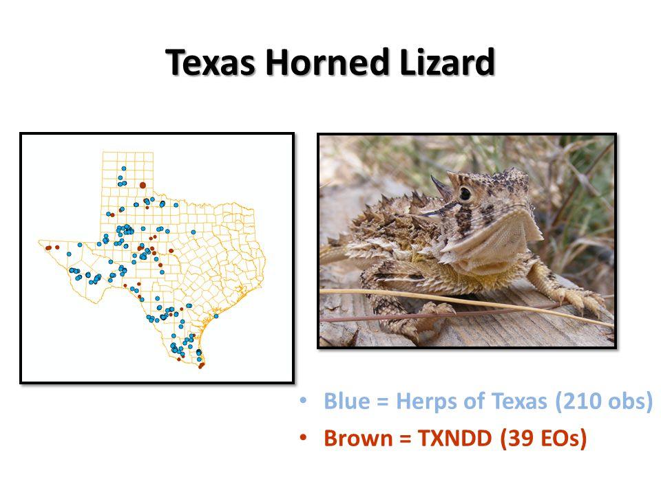 Texas Horned Lizard Blue = Herps of Texas (210 obs) Brown = TXNDD (39 EOs)