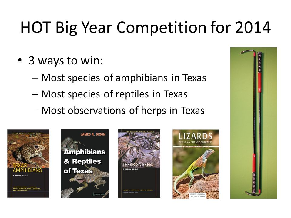 HOT Big Year Competition for 2014 3 ways to win: – Most species of amphibians in Texas – Most species of reptiles in Texas – Most observations of herps in Texas