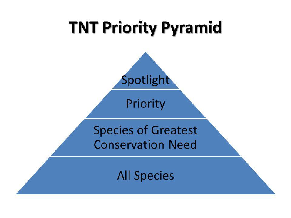 TNT Priority Pyramid