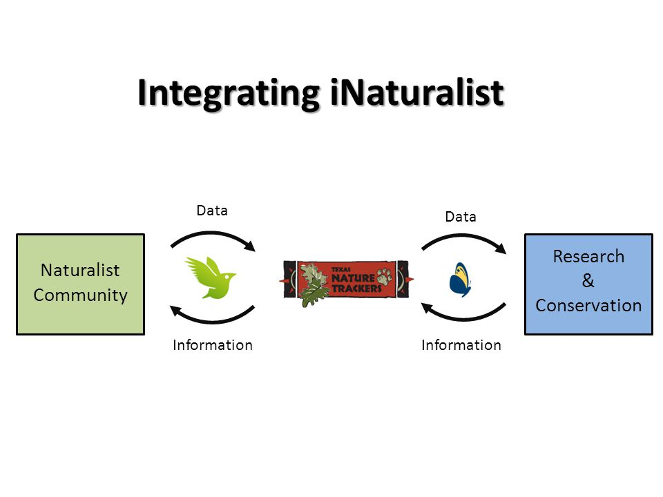 Integrating iNaturalist Naturalist Community Research & Conservation Data Information Data