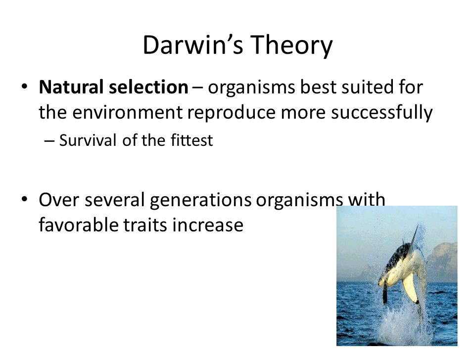 Darwin's Theory Natural selection – organisms best suited for the environment reproduce more successfully – Survival of the fittest Over several generations organisms with favorable traits increase