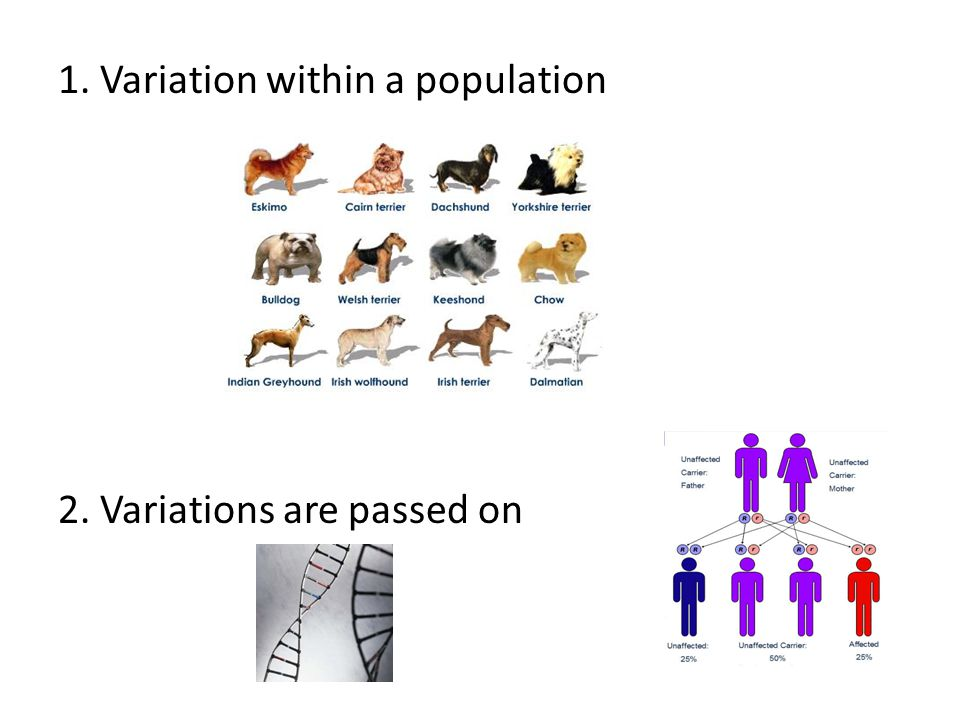 1. Variation within a population 2. Variations are passed on