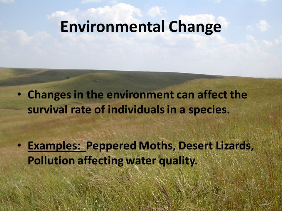 Environmental Change Changes in the environment can affect the survival rate of individuals in a species.