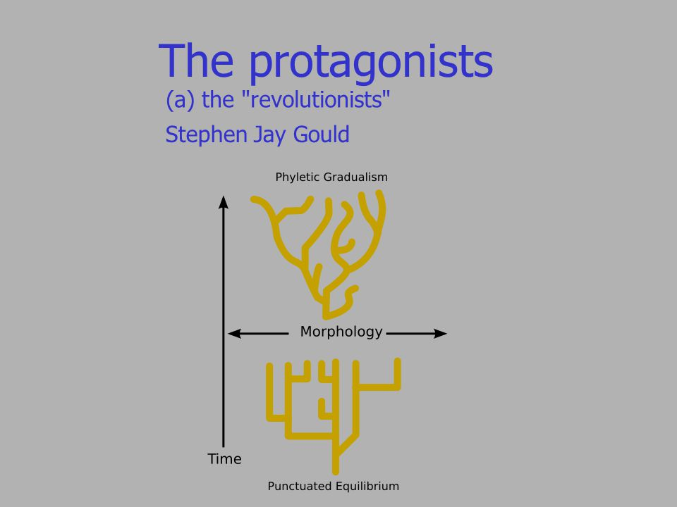 The protagonists (a) the revolutionists Stephen Jay Gould