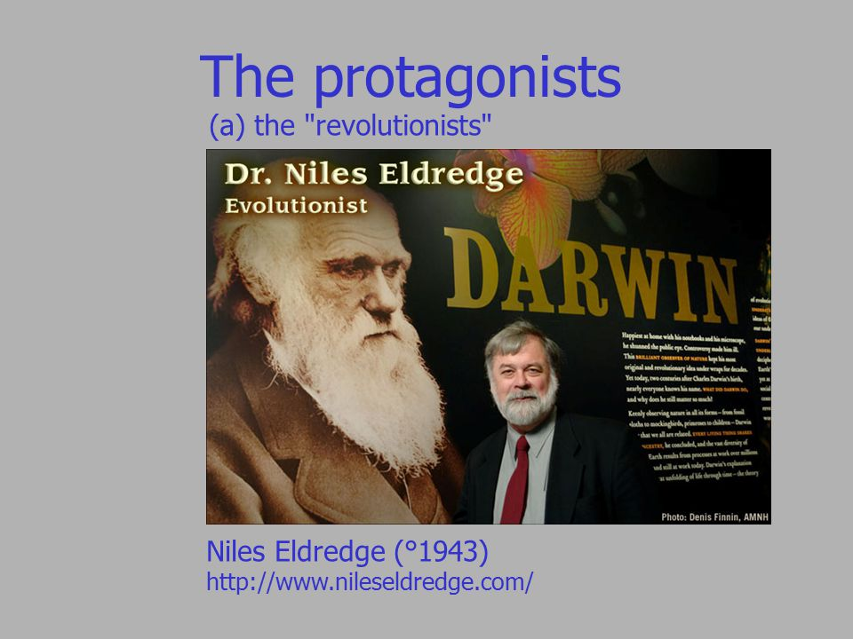 The protagonists (a) the revolutionists Niles Eldredge (°1943) http://www.nileseldredge.com/