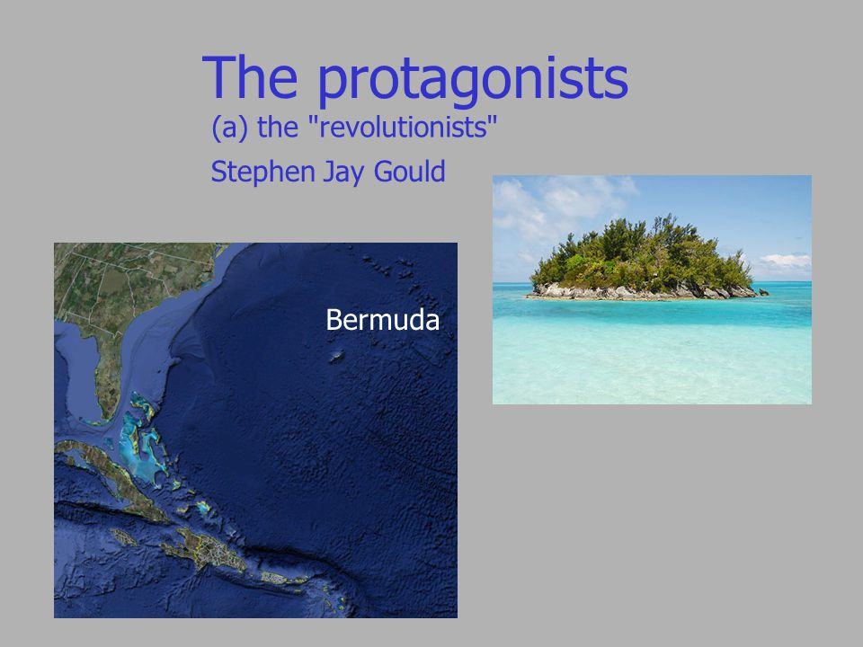 The protagonists (a) the revolutionists Bermuda Bermuda land snail Poecilozonites Peanut snail Poecilozonites Stephen Jay Gould