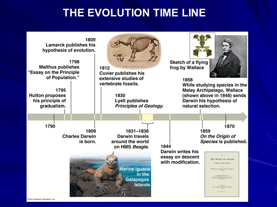 THE EVOLUTION TIME LINE
