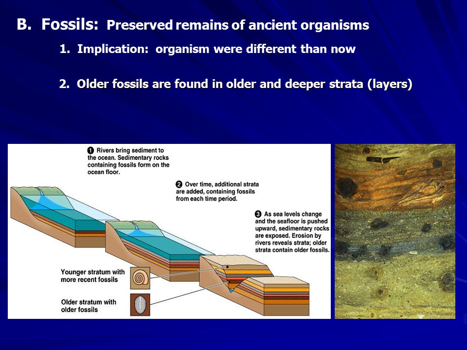 Older fossils are found in older and deeper strata (layers) 2.
