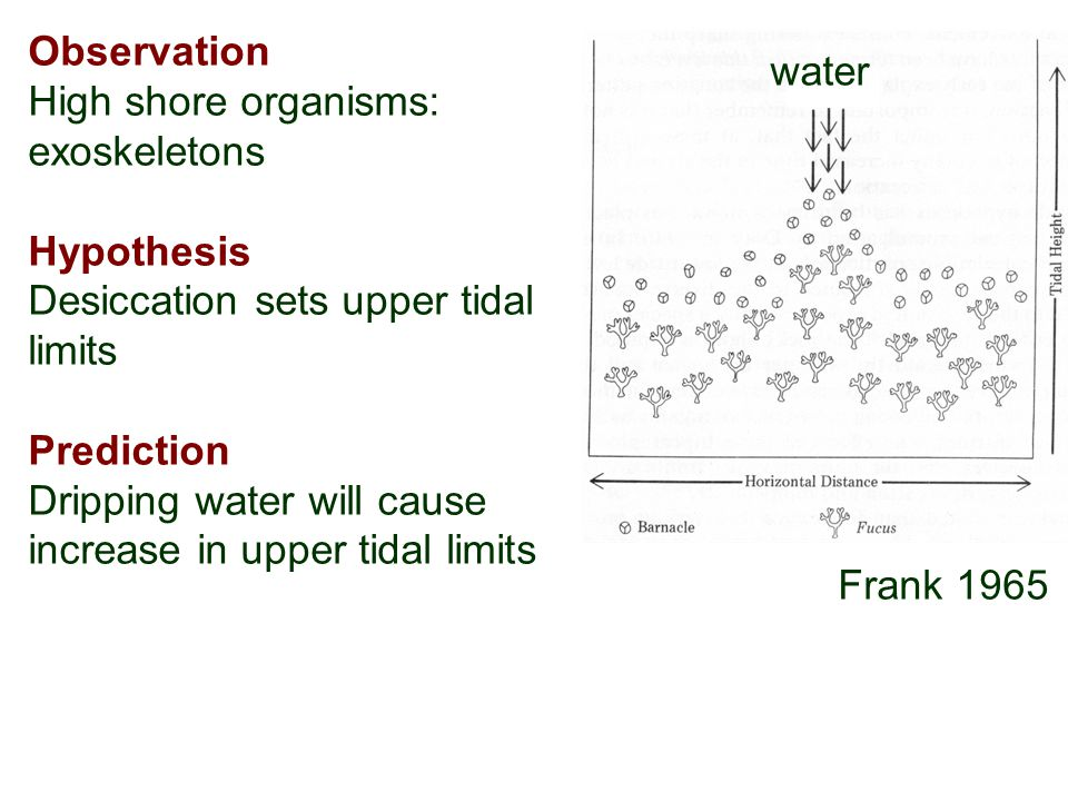 water Frank 1965 Observation High shore organisms: exoskeletons Hypothesis Desiccation sets upper tidal limits Prediction Dripping water will cause increase in upper tidal limits