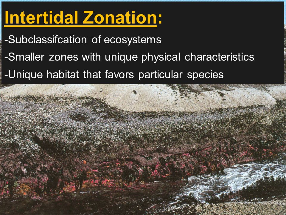 Intertidal Zonation: -Subclassifcation of ecosystems -Smaller zones with unique physical characteristics -Unique habitat that favors particular species