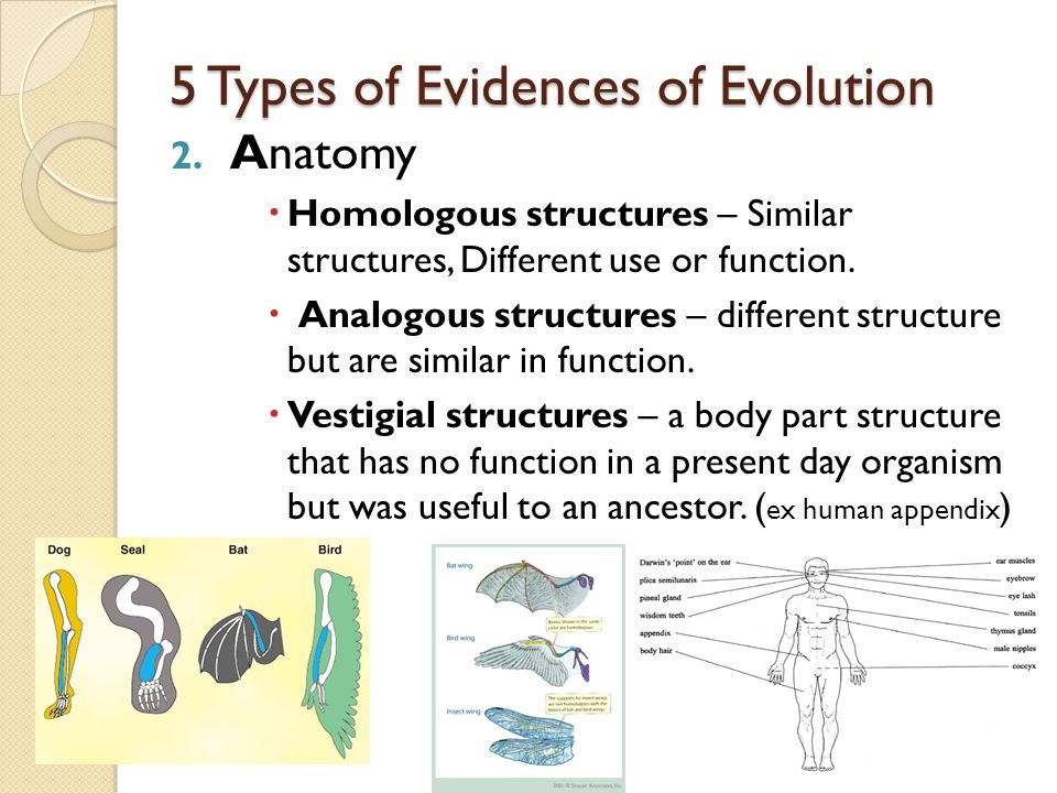 5 Types of Evidences of Evolution 1. Fossils - Recorded for Earth's history.