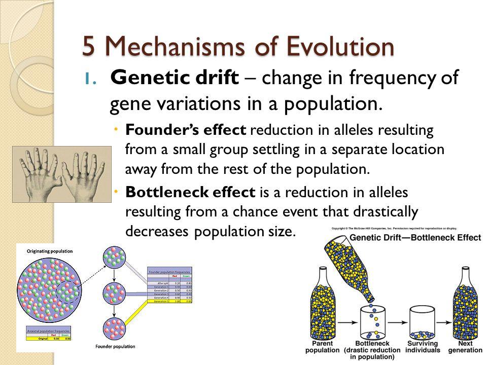 5 Mechanisms of Evolution