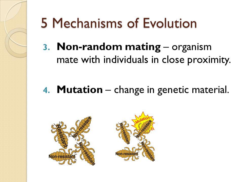 5 Mechanisms of Evolution 2. Genetic flow – migrating individuals transport genes.