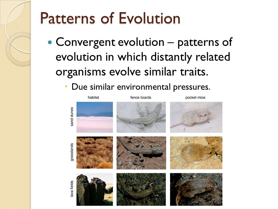 Patterns of Evolution Adaptive radiation (Divergent evolution) – when ancestral species evolve into an array of species to fit number of diverse habit