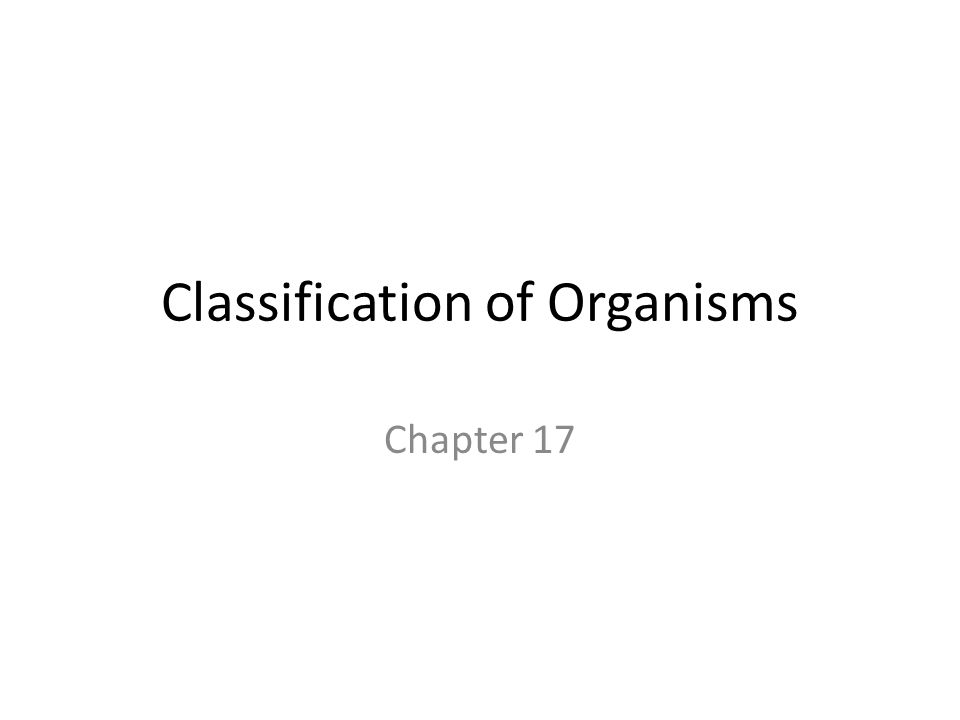 6 Kingdoms The next level of organization is Kingdoms There are 6 Kingdoms – Eubacteria – Archaebacteria – Animalia – Plantae – Fungi – Protista