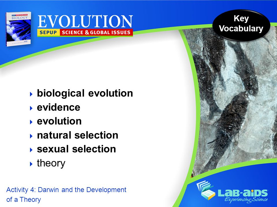 Activity 4: Darwin and the Development of a Theory Activity 4: Darwin and the Development of a Theory  biological evolution  evidence  evolution  natural selection  sexual selection  theory Key Vocabulary