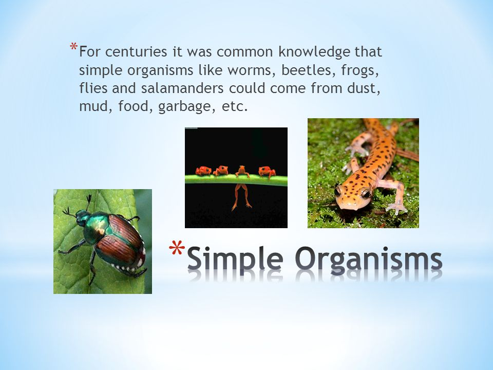* For centuries it was common knowledge that simple organisms like worms, beetles, frogs, flies and salamanders could come from dust, mud, food, garba