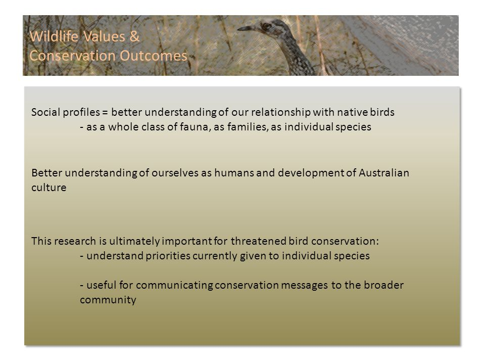 Wildlife Values & Conservation Outcomes Social profiles = better understanding of our relationship with native birds - as a whole class of fauna, as families, as individual species This research is ultimately important for threatened bird conservation: - understand priorities currently given to individual species - useful for communicating conservation messages to the broader community Better understanding of ourselves as humans and development of Australian culture