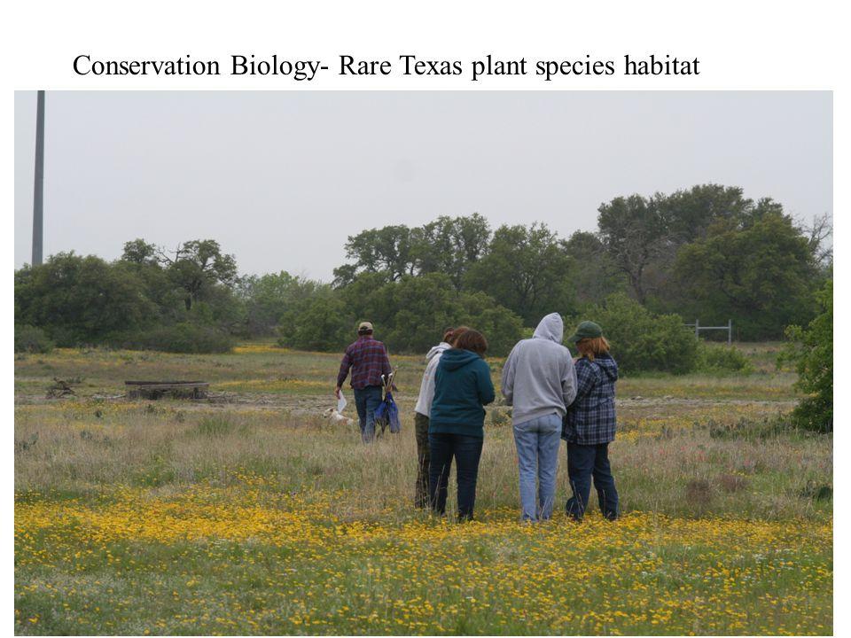 Comanche Peak Prairie Clover –rare Texas endemic