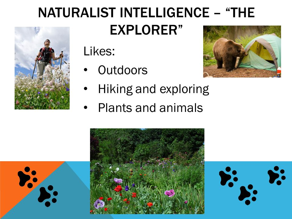 "NATURALIST INTELLIGENCE – ""THE EXPLORER"" Likes: Outdoors Hiking and exploring Plants and animals"