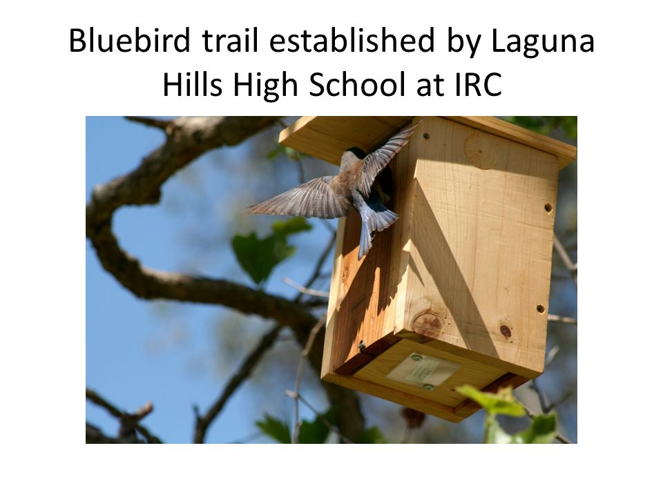 Laguna Hills High School's Environmental and Energy Technology class gets involved with Irvine Ranch Conservancy, building nesting boxes for the cactus wren, which had lost nesting habitat during the last big fires in Orange County.