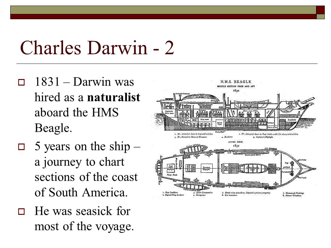 Charles Darwin - 2  1831 – Darwin was hired as a naturalist aboard the HMS Beagle.