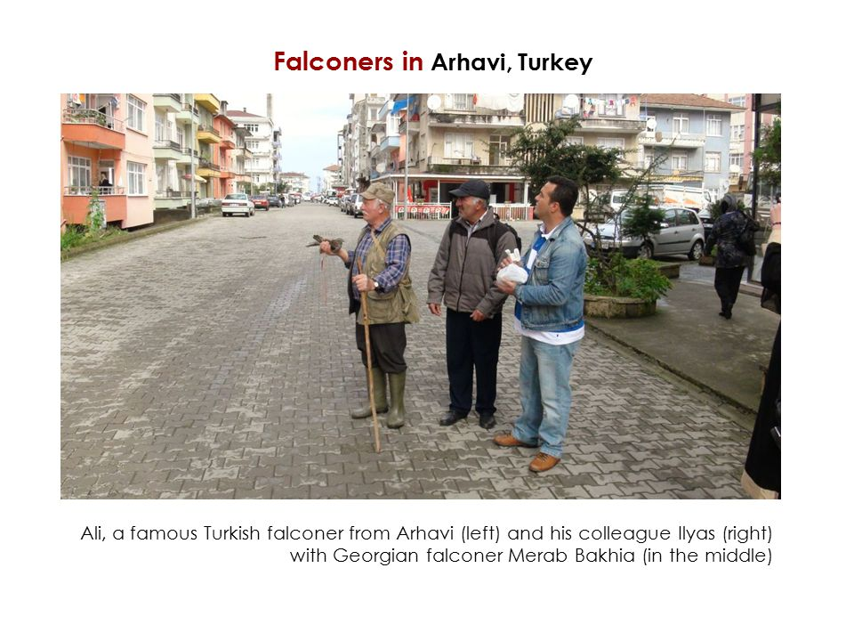 Ali, a famous Turkish falconer from Arhavi (left) and his colleague Ilyas (right) with Georgian falconer Merab Bakhia (in the middle) Falconers in Arhavi, Turkey