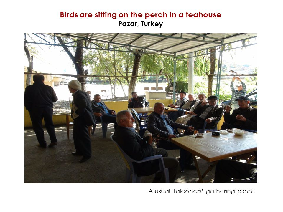 Birds are sitting on the perch in a teahouse Pazar, Turkey A usual falconers' gathering place
