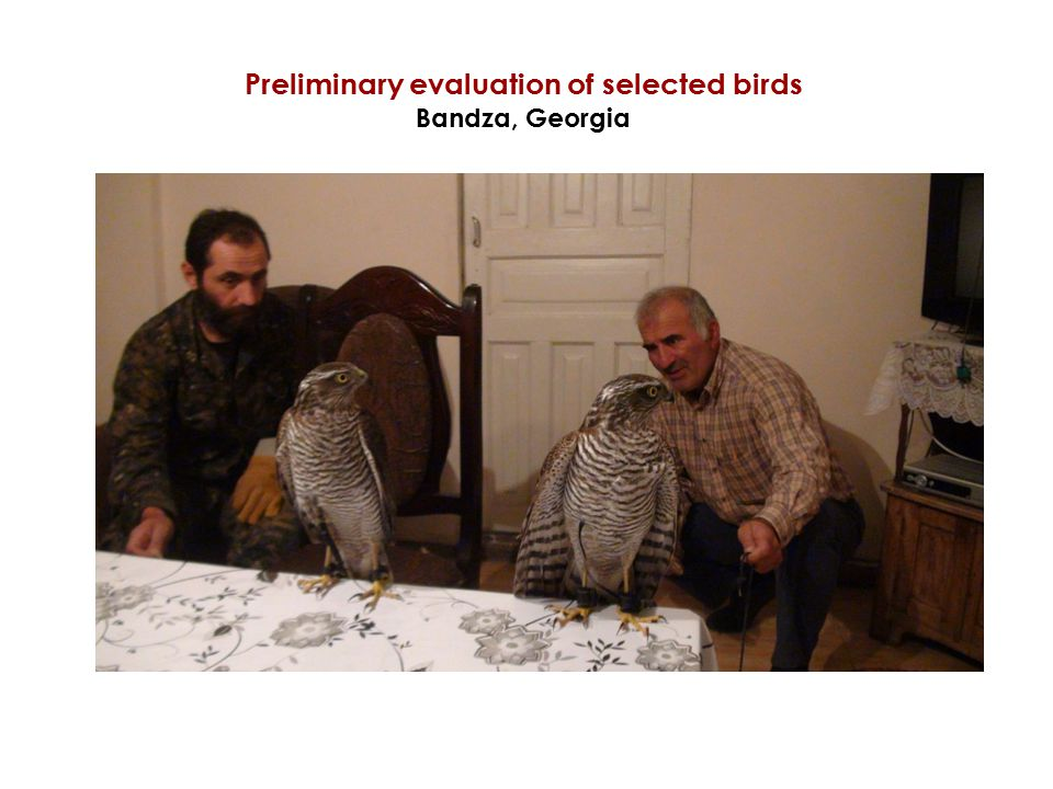 Preliminary evaluation of selected birds Bandza, Georgia