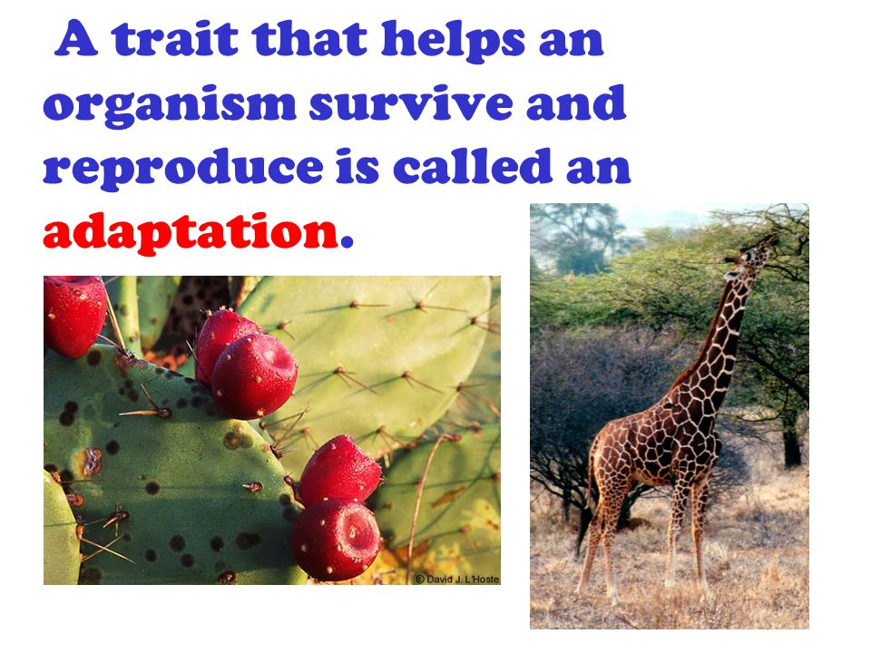 Adaptation can also be described as the way a plant or animal species adjusts to the environment.