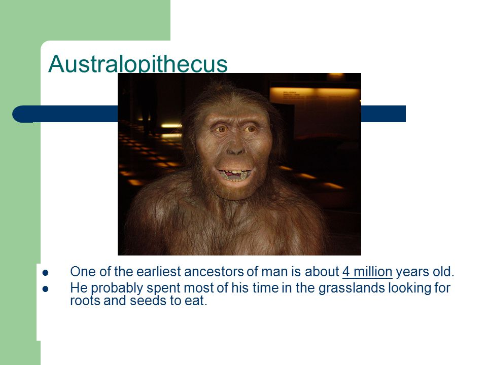 Australopithecus One of the earliest ancestors of man is about 4 million years old.