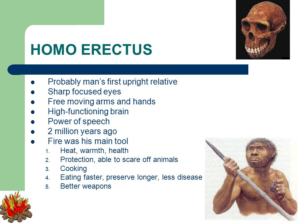 HOMO ERECTUS Probably man's first upright relative Sharp focused eyes Free moving arms and hands High-functioning brain Power of speech 2 million years ago Fire was his main tool 1.