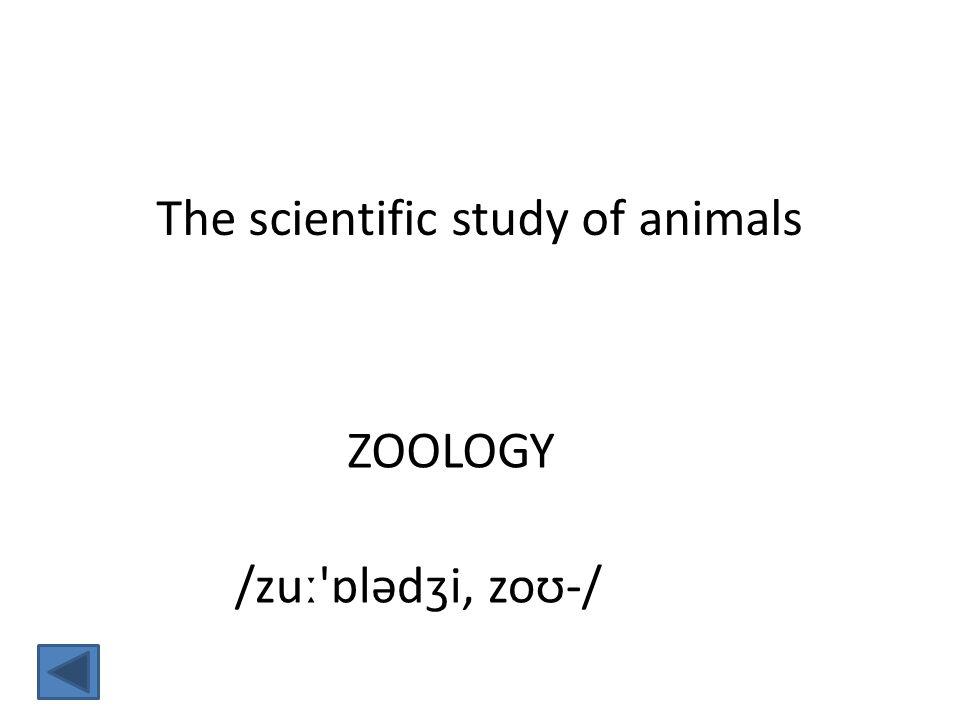 ZOOLOGY The scientific study of animals /zuː ɒlədʒi, zoʊ-/
