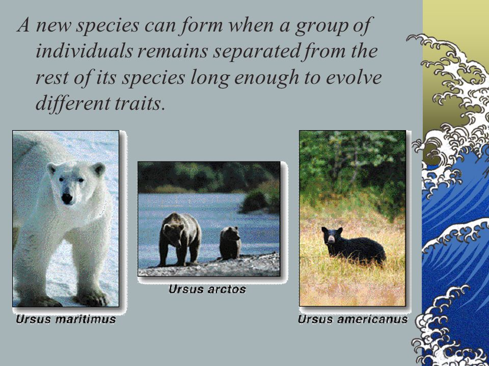 A new species can form when a group of individuals remains separated from the rest of its species long enough to evolve different traits.