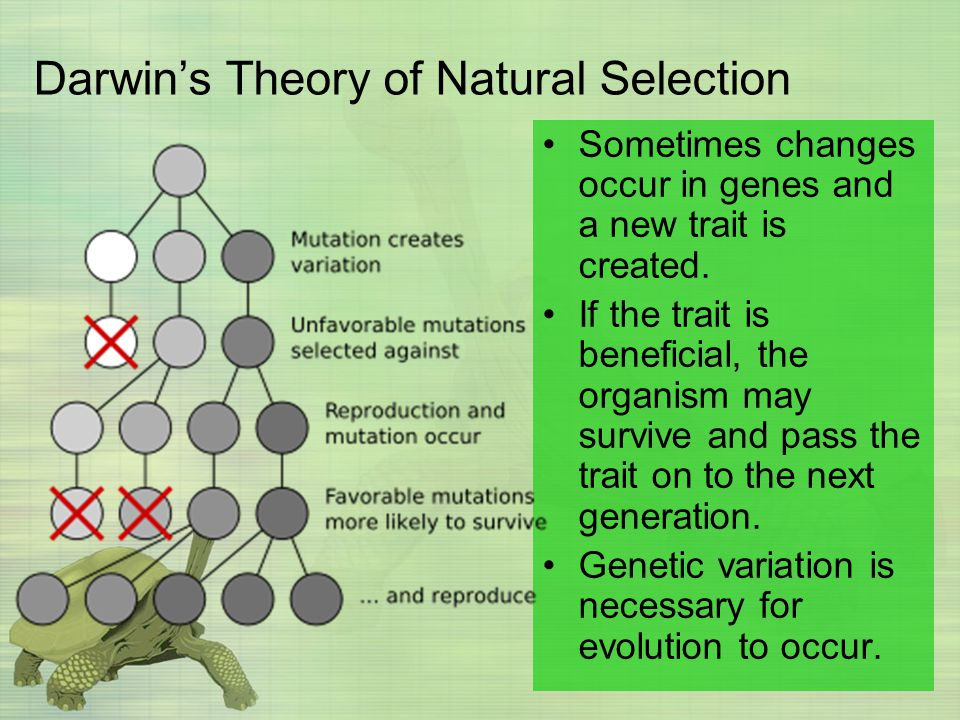 Sometimes changes occur in genes and a new trait is created. If the trait is beneficial, the organism may survive and pass the trait on to the next ge