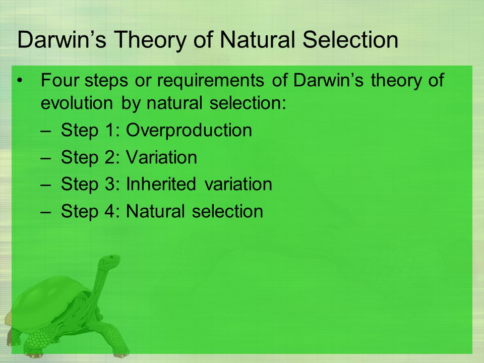 Darwin's Theory of Natural Selection Four steps or requirements of Darwin's theory of evolution by natural selection: –Step 1: Overproduction –Step 2: