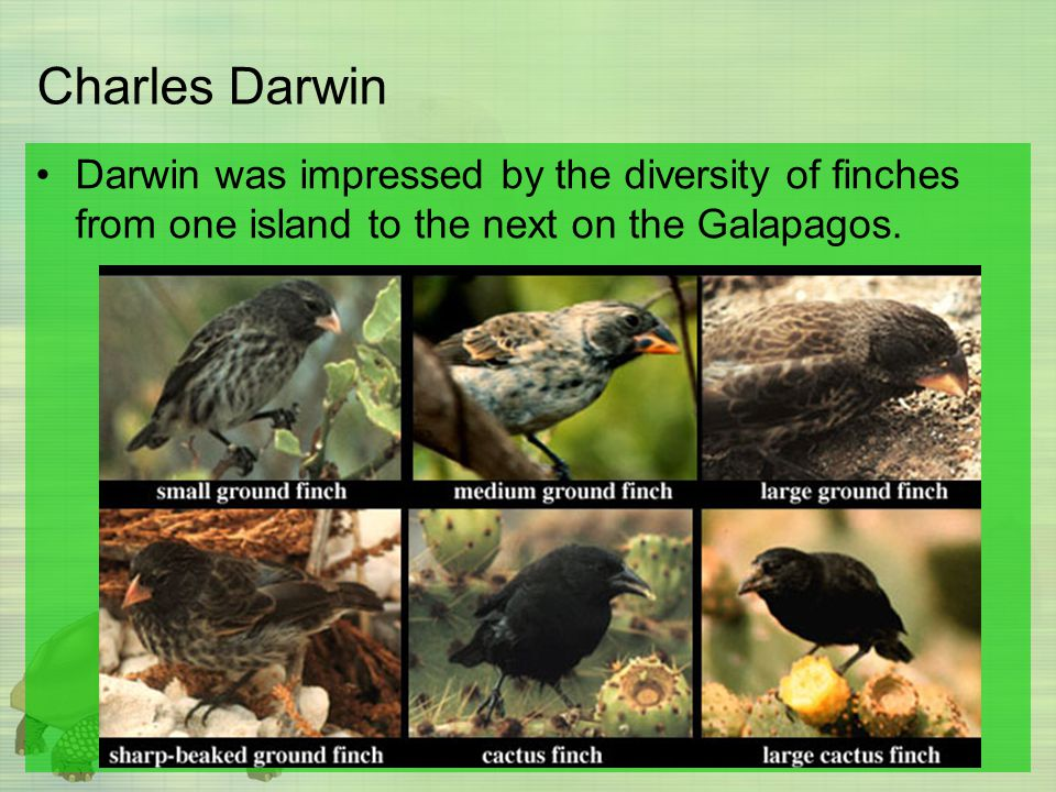 Charles Darwin Darwin was impressed by the diversity of finches from one island to the next on the Galapagos.