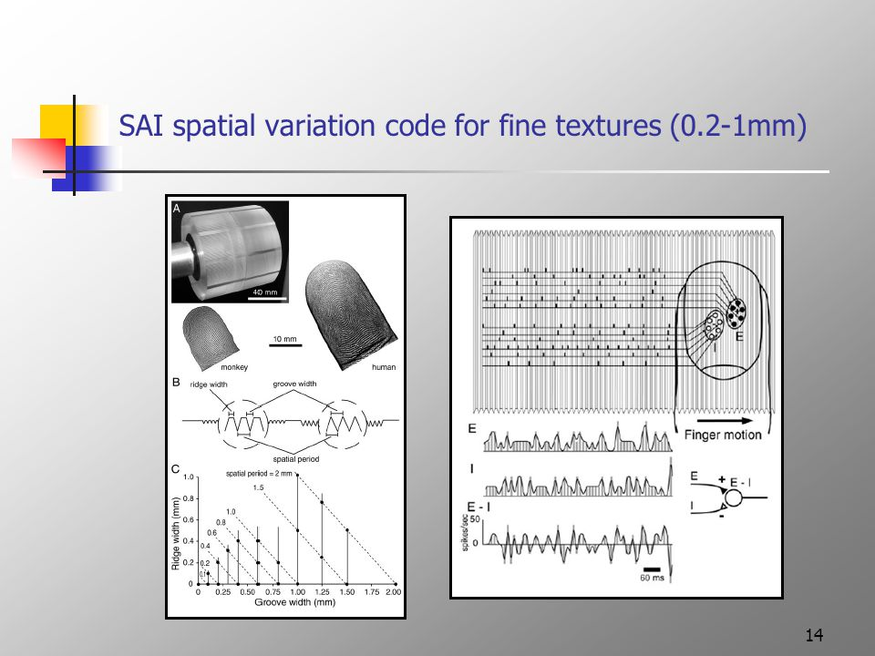14 SAI spatial variation code for fine textures (0.2-1mm)