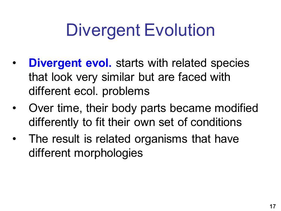 17 Divergent Evolution Divergent evol.