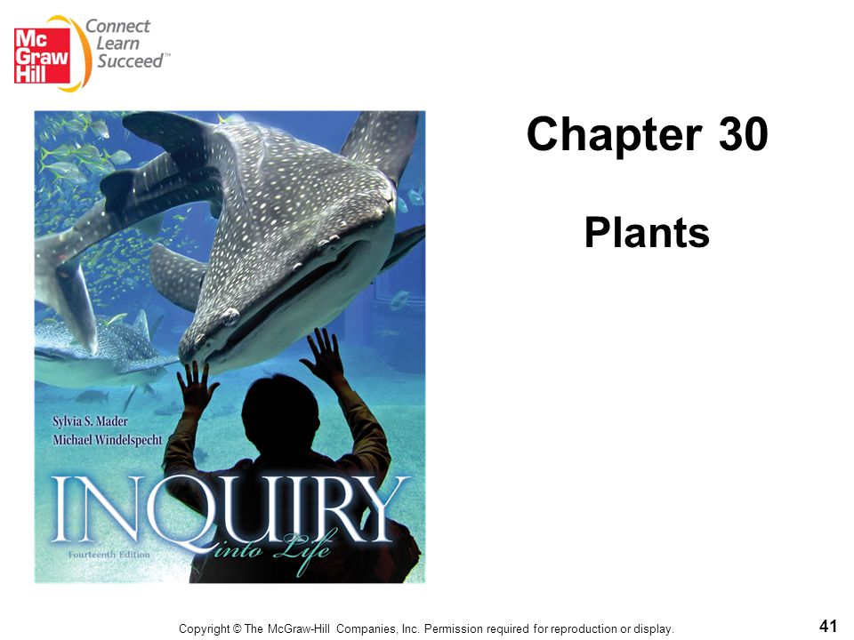 41 Chapter 30 Plants Copyright © The McGraw-Hill Companies, Inc. Permission required for reproduction or display.